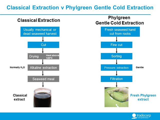 The difference between Classical methods of seaweed extraction and Phylgreen Ascophyllum nodosum seaweed kelp, cold process gentle extraction